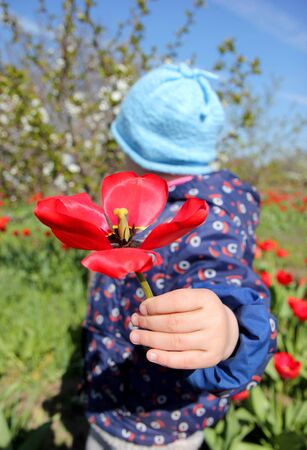 baby girl gives shows a macro flower tulip