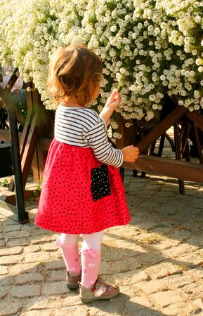 little girl sees flowers on the street on a sunny day