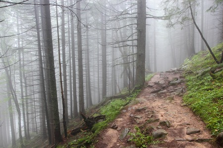 fog in the forest wide path with stones tree trunks Stock Photo