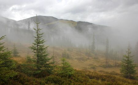 young coniferous forest in fog mountains and hills Stock Photo