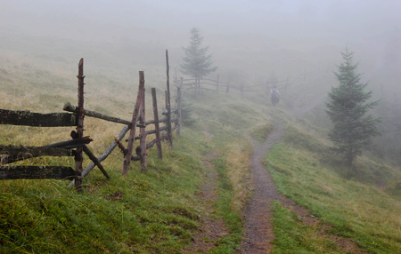 wooden fence in the forest tumanntom man walking on rural road