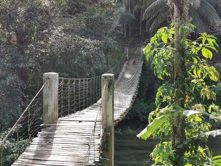 bamboo bridge over the jungle river