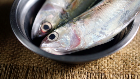 caudal: Indian mackerel fish. Species of mackerel family, commonly found in the Indian and West Pacific oceans, and their surrounding seas. They are important food fish and used in Asian cuisine.