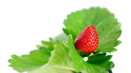 cleaned: Strawberry flavor and fragrance are popular, Strawberry are used widely in a variety of manufacturing, including beverages, foods, confections, perfumes and cosmetics. Stock Photo