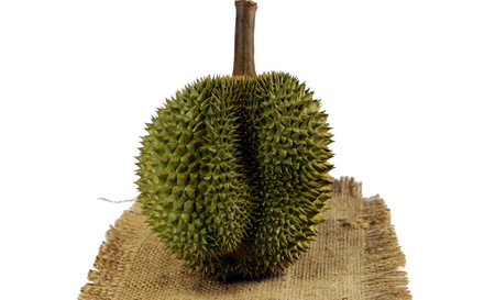 commercially: Durian the king of fruits, numerous spike protuberances of the fruit. Durian is distinctive for its large size, strong odour, and formidable thorn covered. Higher prices in the international market. Stock Photo