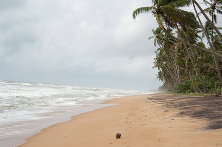 pristine corals: Wild raw empty beach in Sri Lanka