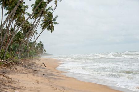 pristine corals: Wild raw empty beach in Sri Lanka