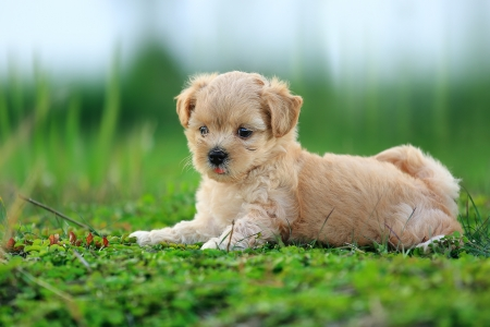 Cute Dog 1 Stock Photo