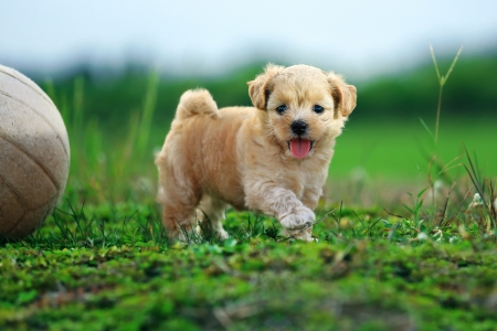 Cute Dog 2 Standard-Bild - 15252575