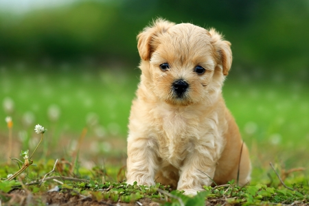 cute dogs: Cute Dog 3