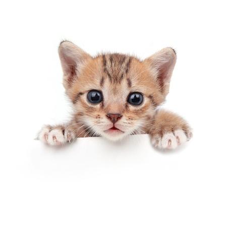 New born Kitten on white background Stock Photo