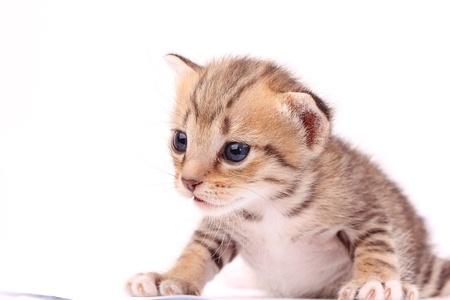 New born Kitten on white background Standard-Bild