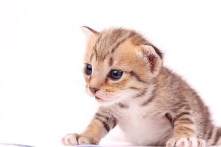 New born Kitten on white background Stock Photo