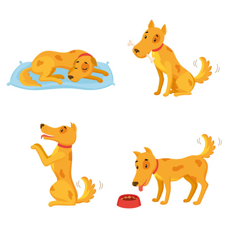 Dog in different states. Cartoon character set. Sleeping, gnawing bone, performing, eating. Vector illustration can be used for kindergarten, elementary school education