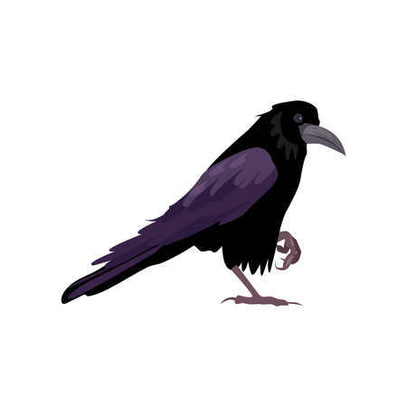Black raven illustration. Bird, black, mystic. Nature life concept. Vector illustration can be used for topics like nature, animal world, encyclopedia Ilustracja