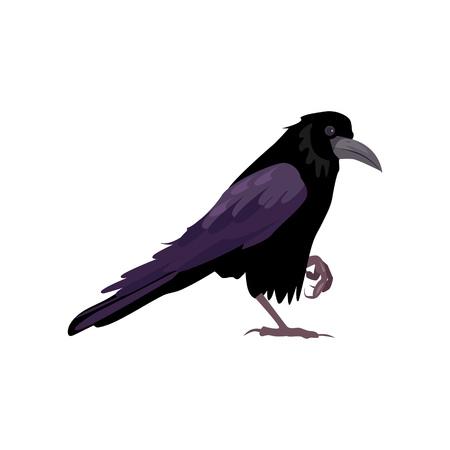 Black raven illustration. Bird, black, mystic. Nature life concept. Vector illustration can be used for topics like nature, animal world, encyclopedia Illustration