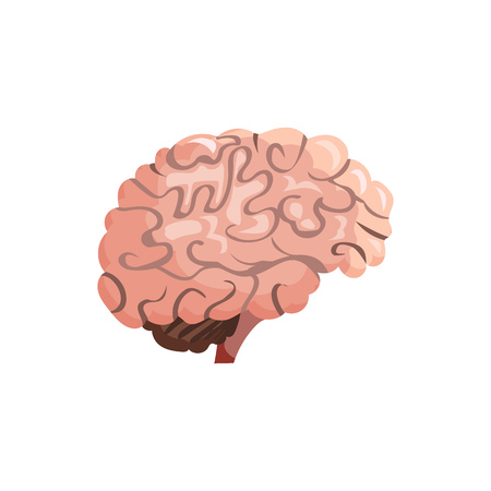 Human brain illustration. Pink, organ, human head. Medicine concept. Vector illustration can be used for hospital, laboratory, medical colleges and universities, anatomy studying