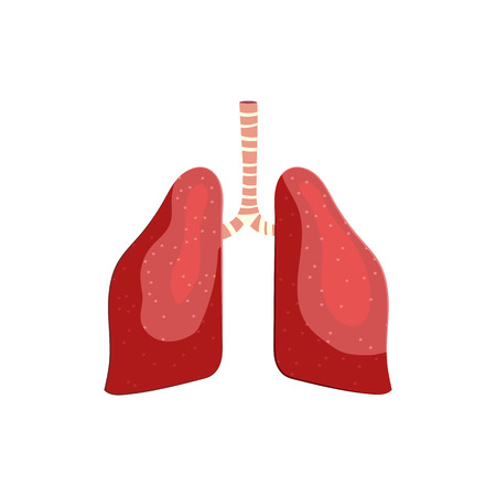 Human lungs illustration. Pink, breathing, air, organ. Medicine concept. Vector illustration can be used for hospital, laboratory, medical colleges and universities, anatomy studying