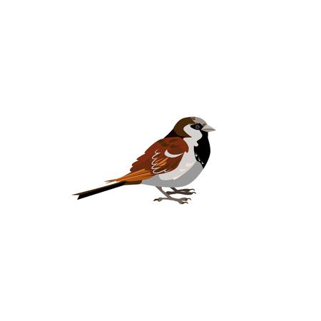 Ilustración de tit azul y gris. Pájaro, pequeño, hermoso. Concepto de vida natural. La ilustración vectorial se puede utilizar para temas como la naturaleza, el mundo animal, la enciclopedia. Ilustración de vector