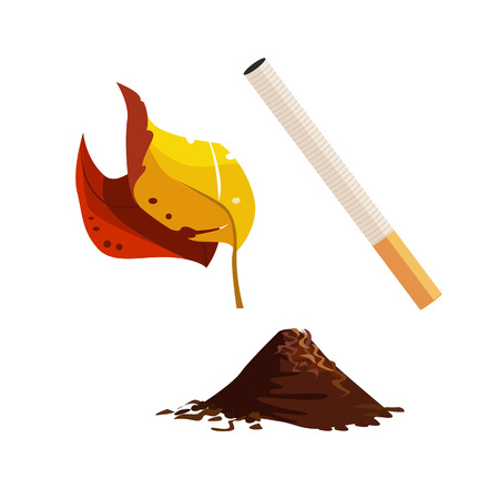 Cigarette and tobacco illustration. Leaf, ash, harmful. Smoking concept. Vector illustration can be used for topics like bad habits, smoker