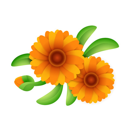 Blooming calendula flower. Orange marigold flowers with green leaves. Can be used for topics like floriculture, gardening, pharmacology, cosmetics Illusztráció