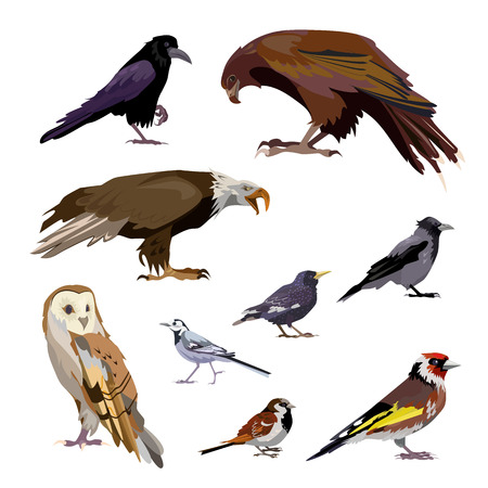 Well-known birds set. Collection of city and wild birds. Can be used for topics like ornithology, zoo, nature
