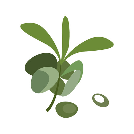 Green olive illustration. Green leaf, branch, nature. Food concept. Vector illustration can be used for topics like agriculture, natural food, eco production
