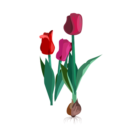 Red tulips illustration. Flower, plant, nature. Spring concept. Vector illustration can be used for topics like garden, field flowers, nature