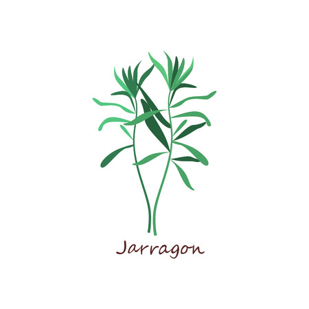 Sprig of tarragon. Green leaves, twigs, estragon. Cooking herbs concept. Vector illustration can be used for topics like seasoning, condiment, cuisine