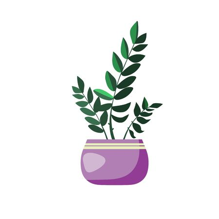 Green Eucalyptus illustration. Plant, household, pot. Home decoration concept. illustration can be used for topics like design, interior, natural decorations 版權商用圖片