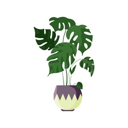Tropical monstera illustration. Plant, leaf, pot. Home decoration concept. illustration can be used for topics like design, interior, natural decorations