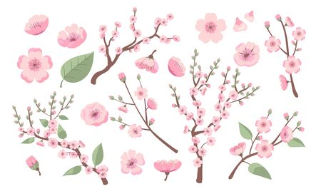 Blooming sakura branches. Apple, almond, peach or cherry tree blossoms, twigs with pink flowers. Vector illustration for spring in Asia, decoration, nature, park topics