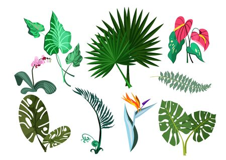 Green plants set illustration. Green plant leaves and flowers on white background. Can be used for topics like nature, garden, house plant 版權商用圖片