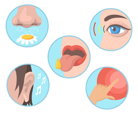 Five senses set. Smelling, tasting, touching, vision, hearing illustrations with nose, eye, tongue, ear and hand. Vector illustrations collection for human organs, sensations, anatomy concept Vettoriali