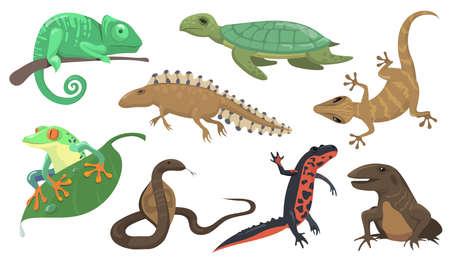 Reptiles and amphibians set. Turtle, lizard, triton, gecko isolated on shite background. Vector illustration for animals, wildlife, rainforest fauna concept Ilustración de vector