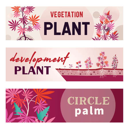 Pink promotional banner designs with marihuana. Bright growing bushes with roots on colorful background. Hemp plantation and legal drug concept. Template for poster, promotion or web design