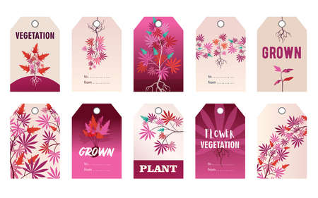 Promotional pink tag designs with hemp plant. Colorful cannabis leaves, roots, bush with text on vivid background. Hemp and legal drug concept. Template for greeting labels or invitation card