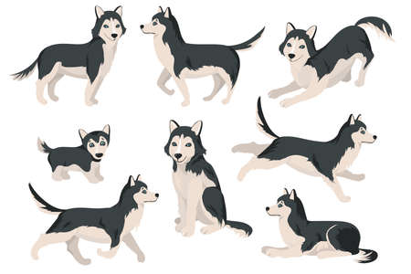 Cute husky dog in different poses flat set for web design. Cartoon funny Siberian puppies sitting, standing, running isolated vector illustration collection. Domestic animals and pets concept