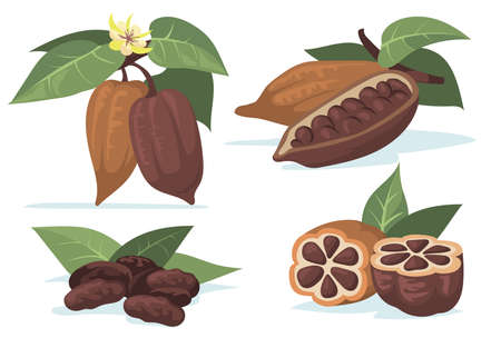 Colorful cocoa beans flat illustration set. Cartoon chocolate beans from cocoa tree with leaves isolated vector illustration collection. Plantation and cacao plant concept