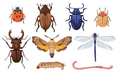 Colorful different insects, worms and bugs flat set for web design. Cartoon field beetles, maggot, earthworm and dragonfly isolated vector illustration collection. Pests and agriculture concept