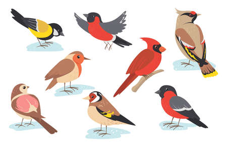 Snowy time winter birds flying or holding branch. Colorful bullfinch, sparrow, tit, thrush set isolated on white. Vector illustration for nature, wildlife, snow season concept