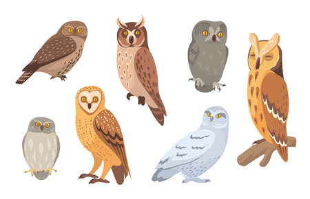 Owl species set. Brown, barn, horned, snowy, eagle, hawk owls isolated on white. Vector illustration for wild animals, wildlife, forest birds concept