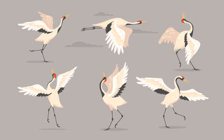 Japanese crane set. White oriental heron or stork, bird flying, dancing or walking with spread wings isolated on grey. Vector illustration for nature, wildlife, wild animal concept
