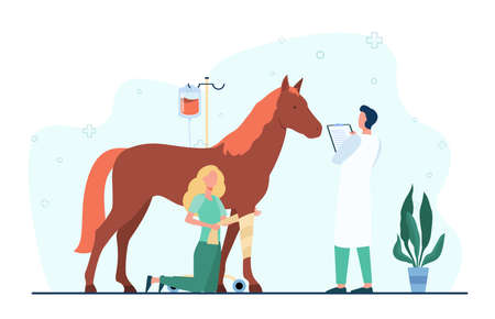 Veterinarian giving treatment to horse. Pet doctor, foal, trauma. Flat vector illustration. Veterinary clinic, animal care, stabling concept for banner, website design or landing web page 免版税图像 - 164916628