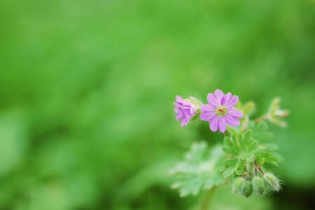small flowers