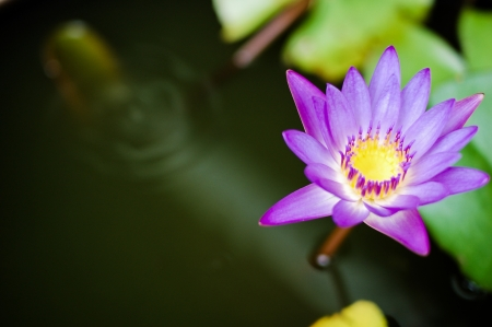 water lily Stock Photo - 21146402