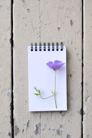 blank notepad and violet flower on rustic plank wood background
