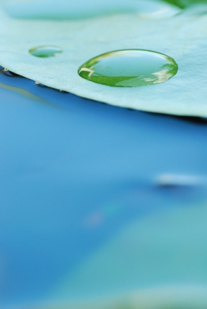 water lily leaves and water drops Stock Photo - 22134733