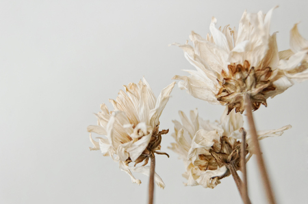 Dead White Flowers. Relationship died, Divorce.