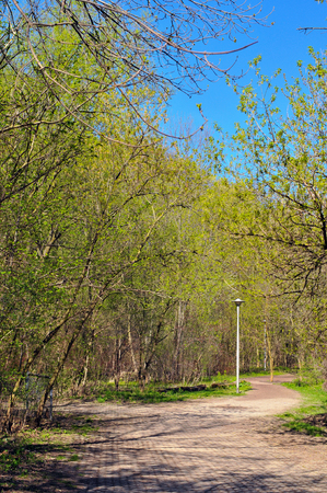Hiking trail into woods in spring in Toronto Stock Photo